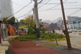 [포토] 돌풍에 넘어간 전신주
