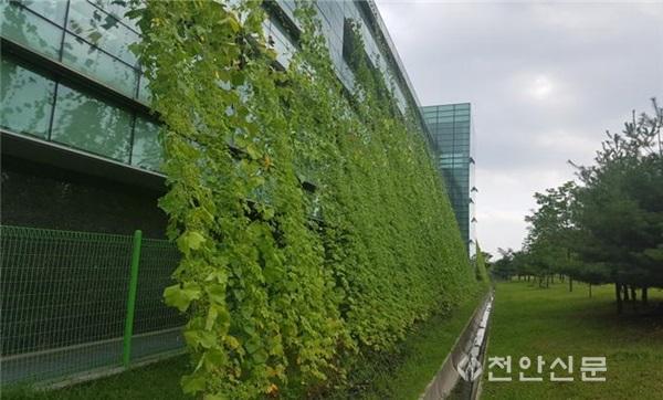 시설관리공단 녹색커튼1.jpg