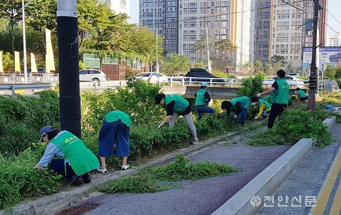 쌍용2동(남녀새마을지도자협의회 도로변 꽃길조성)1.jpg