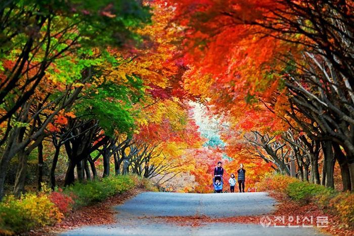 제1회 단풍나무숲길 힐링축제(1).jpg
