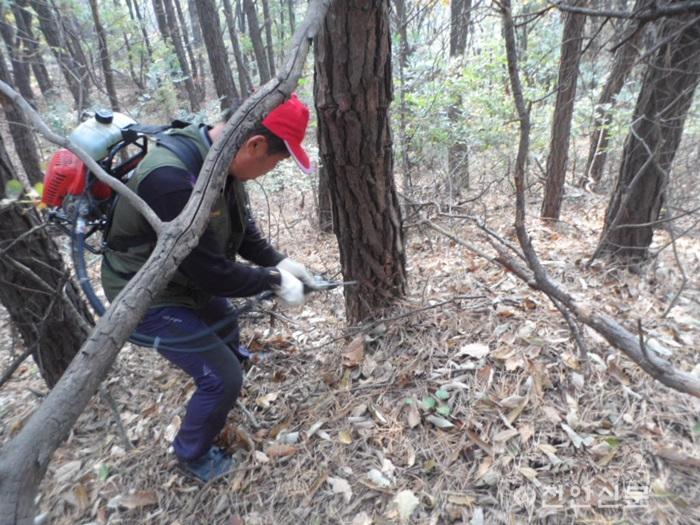 산림휴양과(소나무재선충병 예방 방재 모습).JPG