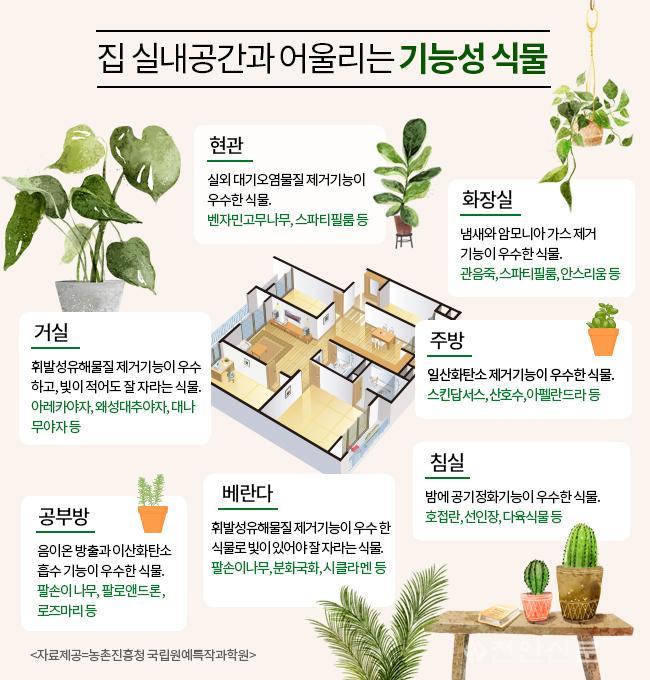 기능성 식물.jpg